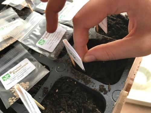 seed-starting-2